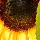 Sunflower by Lady  Dezine