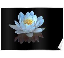 Water Lilly Meditation Poster