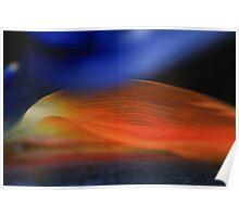Strelitzia Morning-Bird of paradise bloom Poster