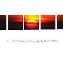 Tropical Sunset ~ Signature Series by Julia Harwood