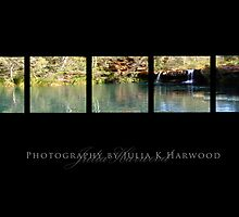 Fern Pool on Black ~ Signature Series by Julia Harwood