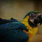 Parrot by Mattie Bryant