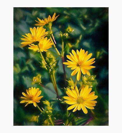 Garden Grace Photographic Print