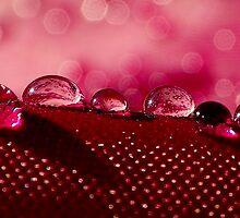 Dew drops on pink fabric by MistyAdkins