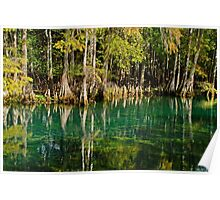 Cypress Tree Reflections Poster