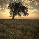 Warmth Fades - Kansas Prairies by Evan Ludes