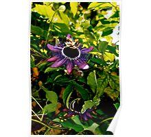 Wild Passiflora Poster