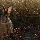 Thumper by Christina Apelseth