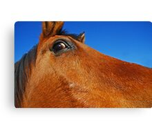 Equine Eye Canvas Print
