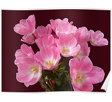 Tulips from Table Cape Poster