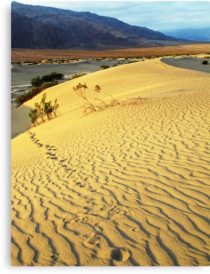 Footsteps-sand dune at dawn-Death Valley by mypic