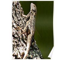 Lizards New Doo Poster