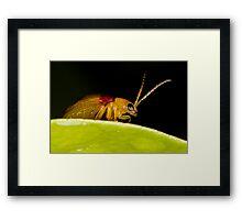 Red-Shouldered Leaf Beetle Framed Print