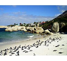 Penguin Paradise Photographic Print