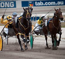 """The Home Stretch"" - Geelong Trots by Sophie Lapsley"