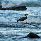Wading Bird in Surf at Twilight by helenmentiplay