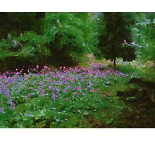 Glade of Flowers Photographic Print