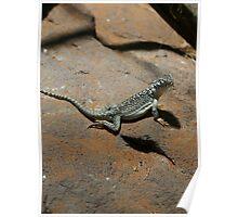 Go Gecko Go Poster