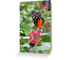 Hecale Longwing - Heliconius hecale zuleika Greeting Card
