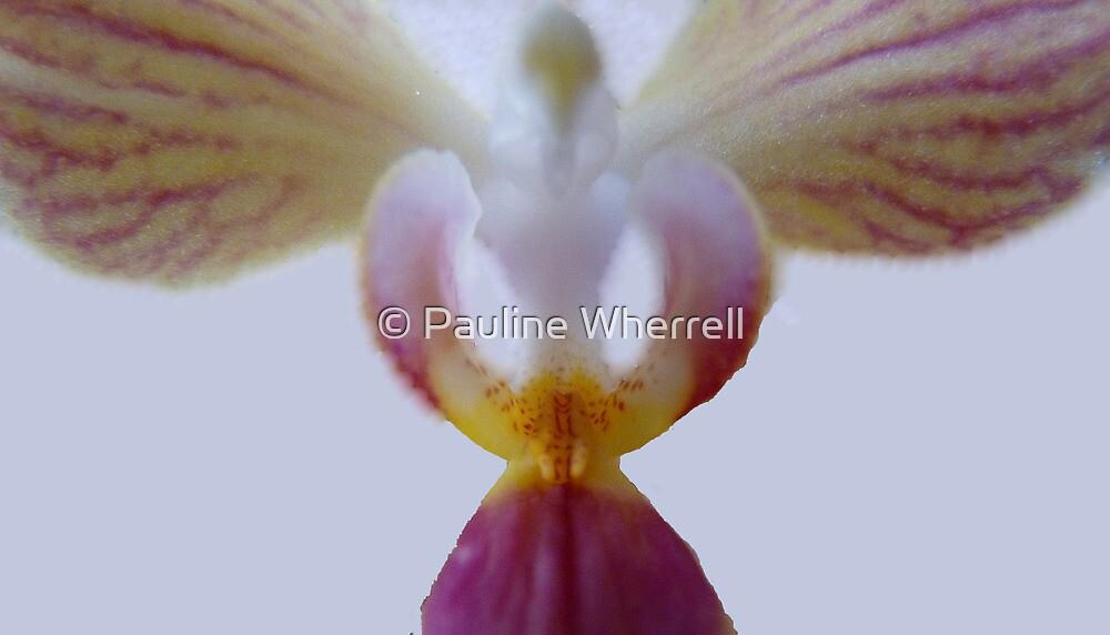 An angel for Sherri by © Pauline Wherrell