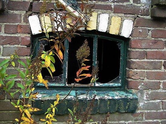 Broken Window by ienemien