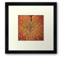 Sunflower Seed Pattern Framed Print