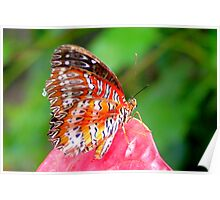 Leopard Lacewing - Cethosia cyane Poster