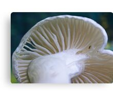 White Wax Cap Canvas Print