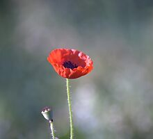 We Will Remember Our Fallen Heroes... by Sandra Cockayne