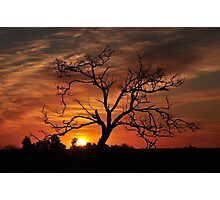 Meditation Tree in Flaming Sunrise Photographic Print