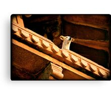 Wild dog in Agra Fort, India Canvas Print