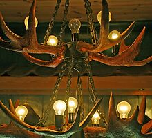 Antlers with bulbs by Arie Koene