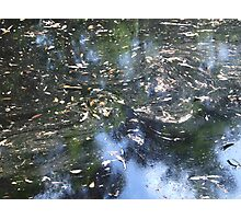 Leaves on the water - James Gray Preserve Photographic Print