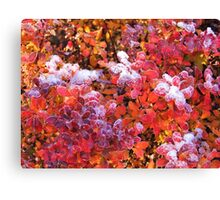 Frosting Canvas Print