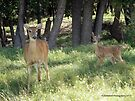 Greetings from Mother and Baby Deer ! by Barberelli