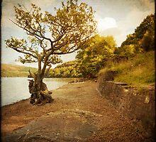 Spirit of the Land by Liz Scott