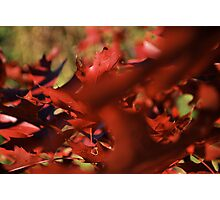waving red Photographic Print