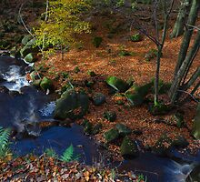 Autumn Colours, Padley Gorge. by Nick Atkin