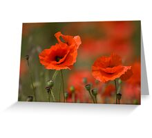 Poppies in the wind... Greeting Card