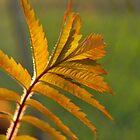 leaf 5 by Jeff Stroud