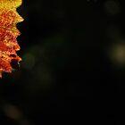 Leaves  by Jeff Stroud