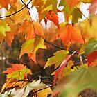 leaf 10 by Jeff Stroud