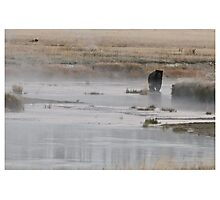 Yellowstone Grizzly - Wyoming USA Photographic Print