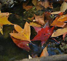 leaf 12 by Jeff Stroud