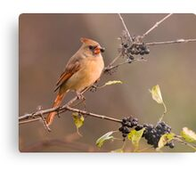 Female Northern Cardinal - Ontario Canada Metal Print