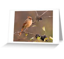 Female Northern Cardinal - Ontario Canada Greeting Card