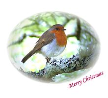 Robin Red Breast for Christmas - Ellipse  by dizzyg