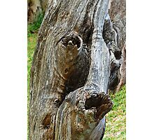 Old Man Tree Photographic Print