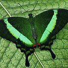 Emerald Swalowtail by PAPILON
