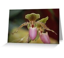Furry Orchid Greeting Card